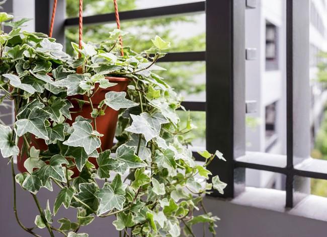 Gợi ý 8 loại cây cảnh nên mua về trồng ngay để giảm tác động ô nhiễm không khí - Ảnh 2.