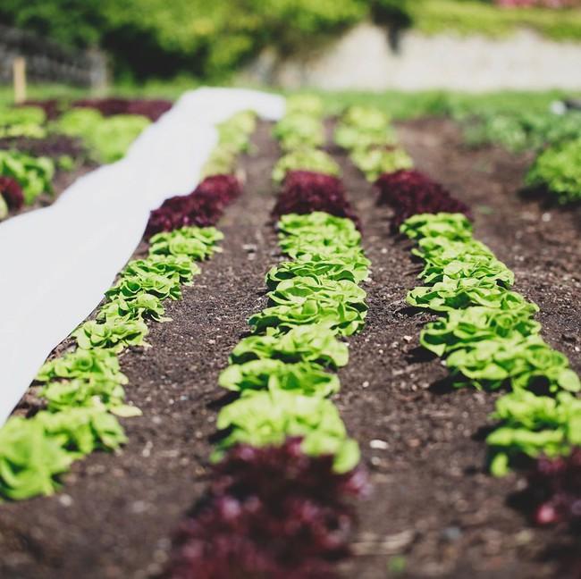 Người đàn ông tự trồng rau quả sạch trên mảnh vườn rộng 225m2 của gia đình ở ngoại ô - Ảnh 14.