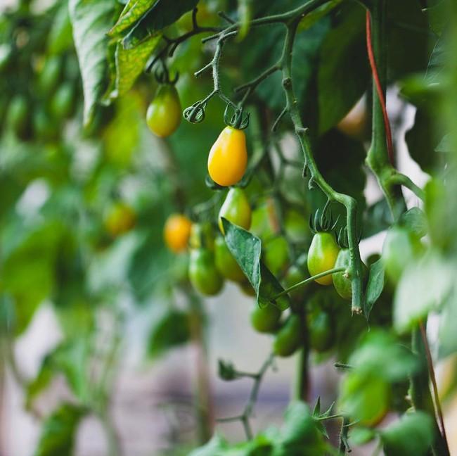 Người đàn ông tự trồng rau quả sạch trên mảnh vườn rộng 225m2 của gia đình ở ngoại ô - Ảnh 13.