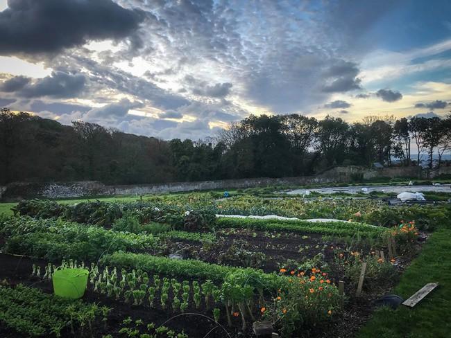Người đàn ông tự trồng rau quả sạch trên mảnh vườn rộng 225m2 của gia đình ở ngoại ô - Ảnh 4.