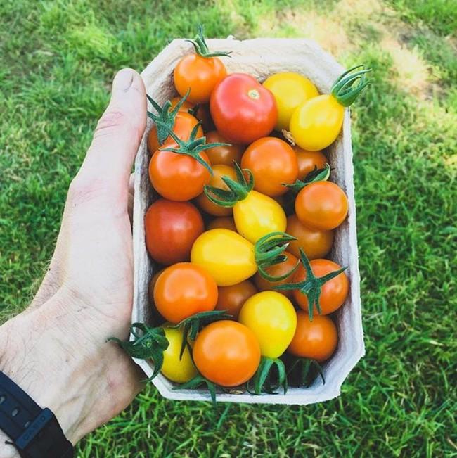 Người đàn ông tự trồng rau quả sạch trên mảnh vườn rộng 225m2 của gia đình ở ngoại ô - Ảnh 6.