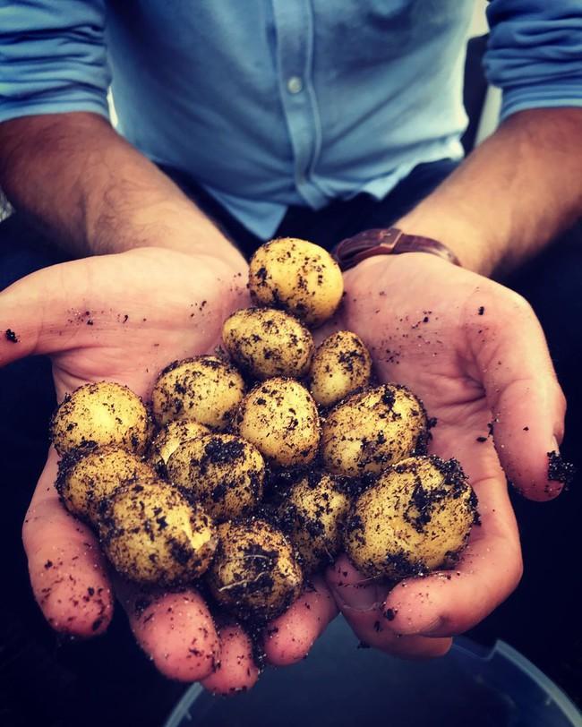 Anh chàng điển trai khiến hàng nghìn cô gái ngưỡng mộ khi trồng cả một sân thượng rau quả xanh tươi - Ảnh 14.