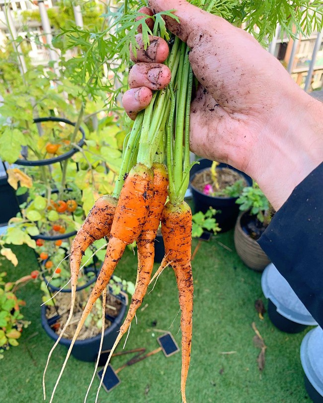 Anh chàng điển trai khiến hàng nghìn cô gái ngưỡng mộ khi trồng cả một sân thượng rau quả xanh tươi - Ảnh 8.
