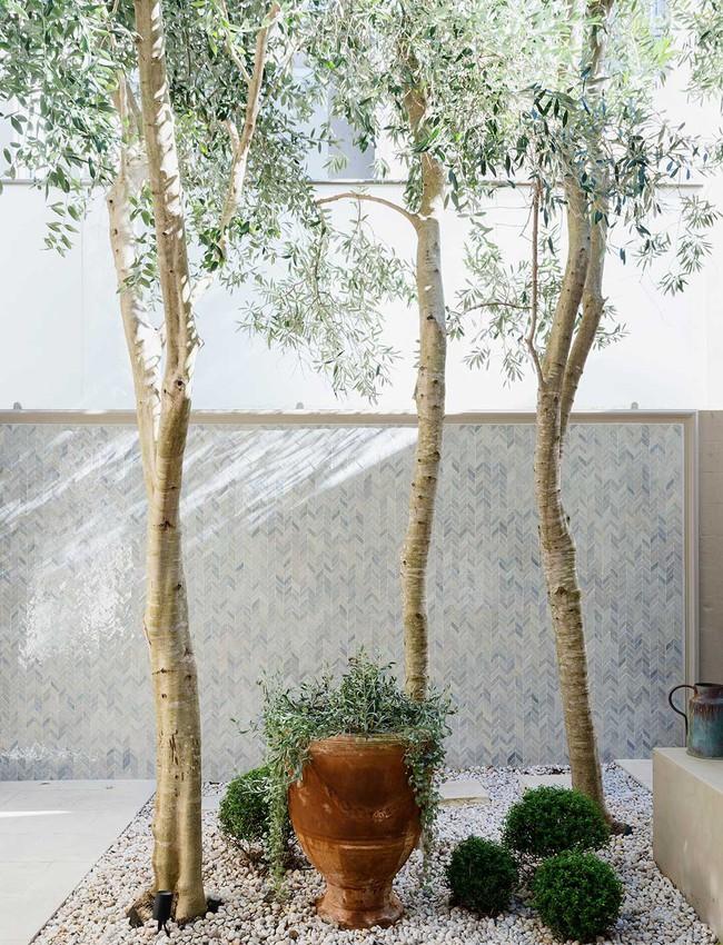 Vô vàn cách sáng tạo để trồng cây ngay cả khi bạn sở hữu một không gian nhỏ - Ảnh 6.
