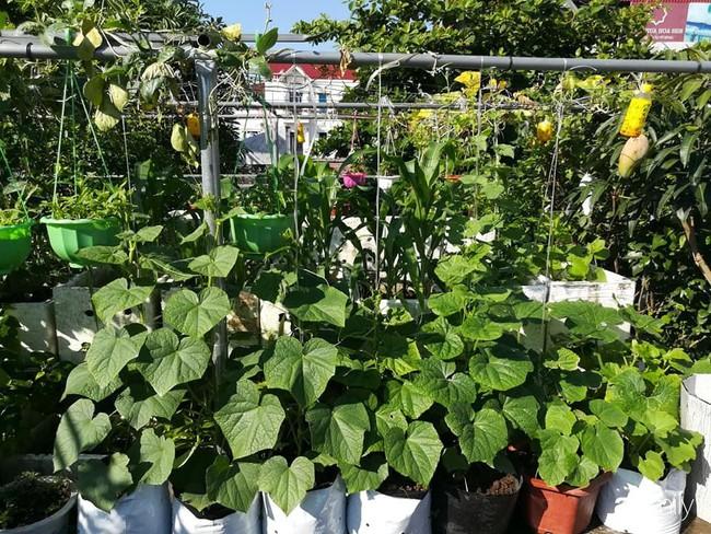 Mẹ Hải Dương trồng rau xanh nuôi gà sạch trên sân thượng 30m2 - Ảnh 11.