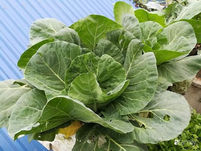 Mẹ Hải Dương trồng rau xanh nuôi gà sạch trên sân thượng 30m2 - Ảnh 7.