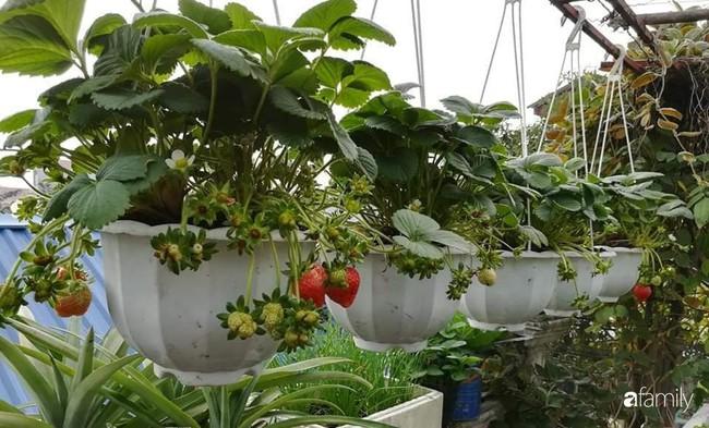 Mẹ Hải Dương trồng rau xanh nuôi gà sạch trên sân thượng 30m2 - Ảnh 6.