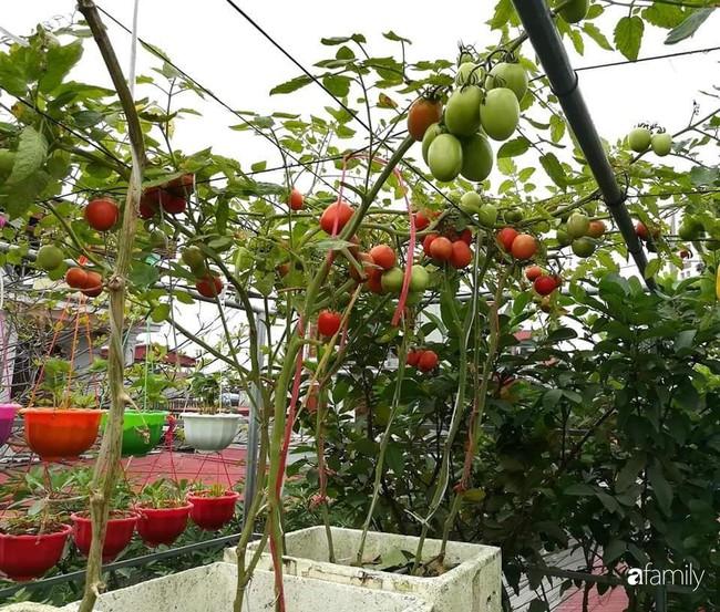 Mẹ Hải Dương trồng rau xanh nuôi gà sạch trên sân thượng 30m2 - Ảnh 4.