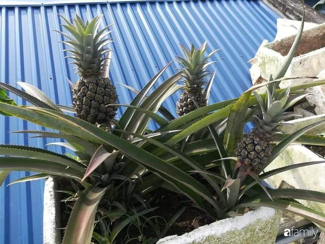 Mẹ Hải Dương trồng rau xanh nuôi gà sạch trên sân thượng 30m2 - Ảnh 22.