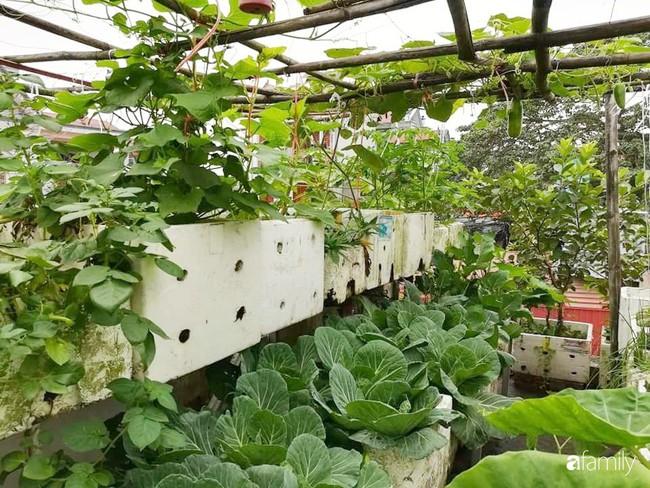 Mẹ Hải Dương trồng rau xanh nuôi gà sạch trên sân thượng 30m2 - Ảnh 3.