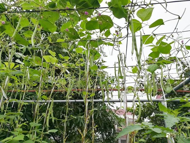 Mẹ Hải Dương trồng rau xanh nuôi gà sạch trên sân thượng 30m2 - Ảnh 2.