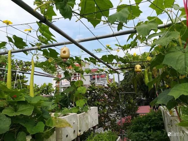Mẹ Hải Dương trồng rau xanh nuôi gà sạch trên sân thượng 30m2 - Ảnh 1.