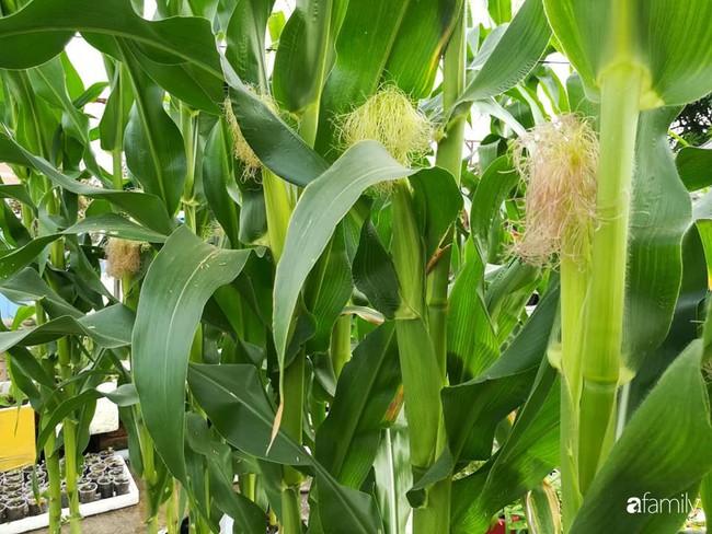 Mẹ Hải Dương trồng rau xanh nuôi gà sạch trên sân thượng 30m2 - Ảnh 19.