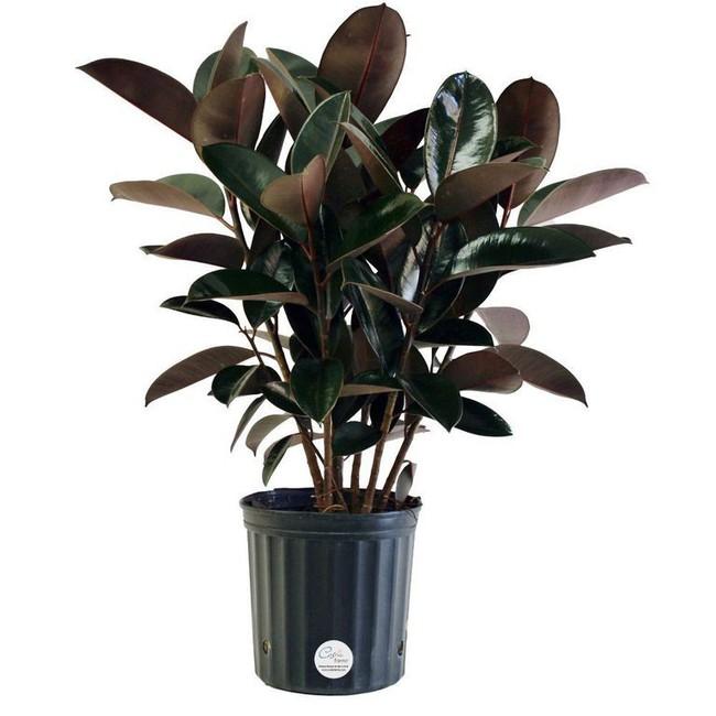 6 loại cây làm sạch không khí mà bạn nhất định phải sở hữu trong nhà trong tình hình hiện nay - Ảnh 1.