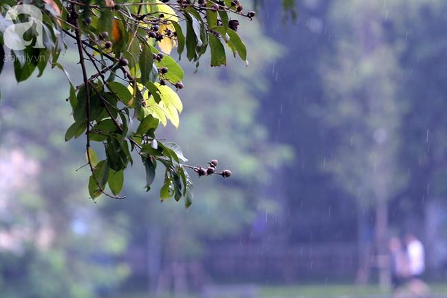 Người dân tận hưởng gì sau cơn mưa giúp không khí Hà Nội sạch hơn - Ảnh 15.