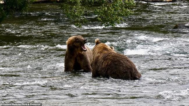 Gấu xám gầy trơ xương cùng  - Ảnh 5.