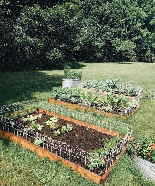 """Cô gái làm văn phòng full-time vẫn trồng được khu vườn xanh mướt mắt nhờ kỹ thuật """"không xới đất"""" lạ lùng  - Ảnh 5."""
