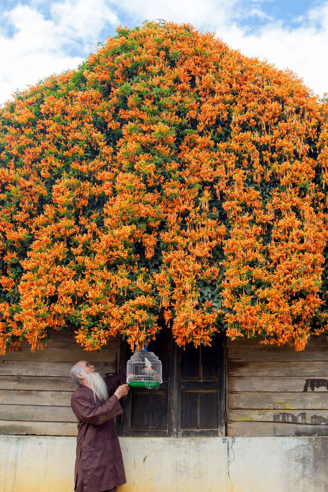 Hội chị em phát sốt đòi kéo nhau đi Lâm Đồng check in ở ngôi nhà phủ đầy hoa da cam như truyện cổ tích, từng lên cả báo Mỹ - Ảnh 5.