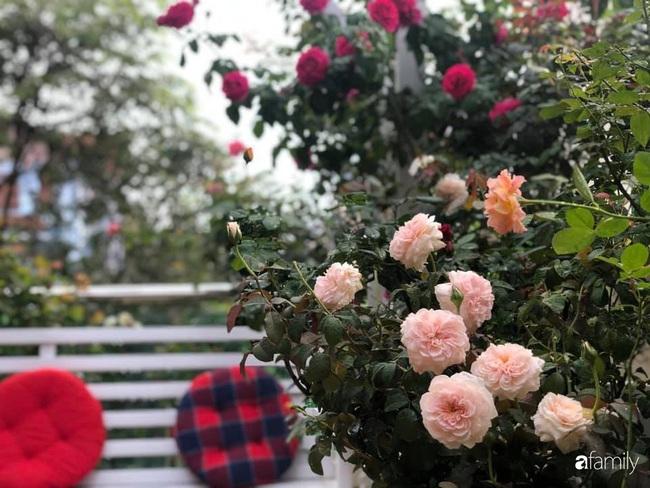 70 gốc hồng khoe hương sắc trên sân thượng nhờ tình yêu và tâm huyết chăm cây của cô giáo xứ Thanh - Ảnh 13.