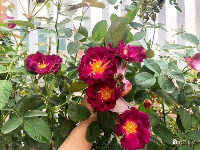 70 gốc hồng khoe hương sắc trên sân thượng nhờ tình yêu và tâm huyết chăm cây của cô giáo xứ Thanh - Ảnh 3.
