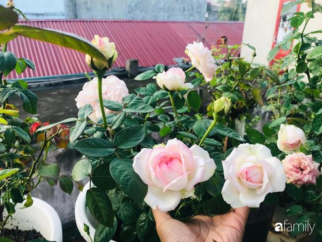 70 gốc hồng khoe hương sắc trên sân thượng nhờ tình yêu và tâm huyết chăm cây của cô giáo xứ Thanh - Ảnh 2.
