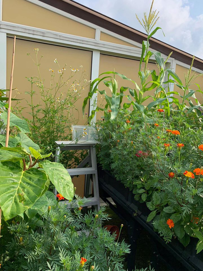 Cô gái trẻ quyết tâm biến sân thượng 20m2 thành khu vườn hữu cơ trồng không thiếu thứ gì khiến ai ngắm cũng ngỡ ngàng - Ảnh 9.