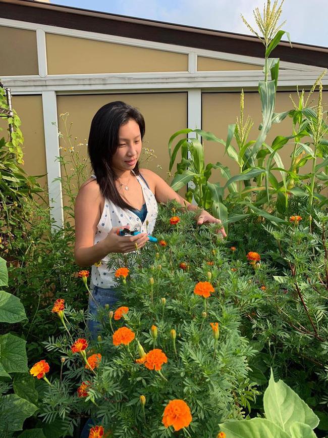 Cô gái trẻ quyết tâm biến sân thượng 20m2 thành khu vườn hữu cơ trồng không thiếu thứ gì khiến ai ngắm cũng ngỡ ngàng - Ảnh 7.