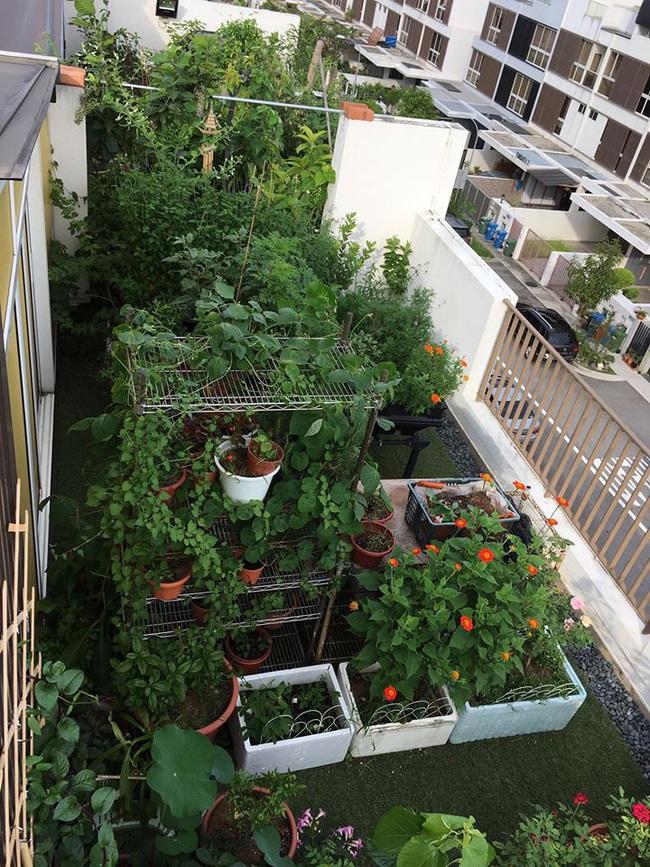 Cô gái trẻ quyết tâm biến sân thượng 20m2 thành khu vườn hữu cơ trồng không thiếu thứ gì khiến ai ngắm cũng ngỡ ngàng - Ảnh 4.