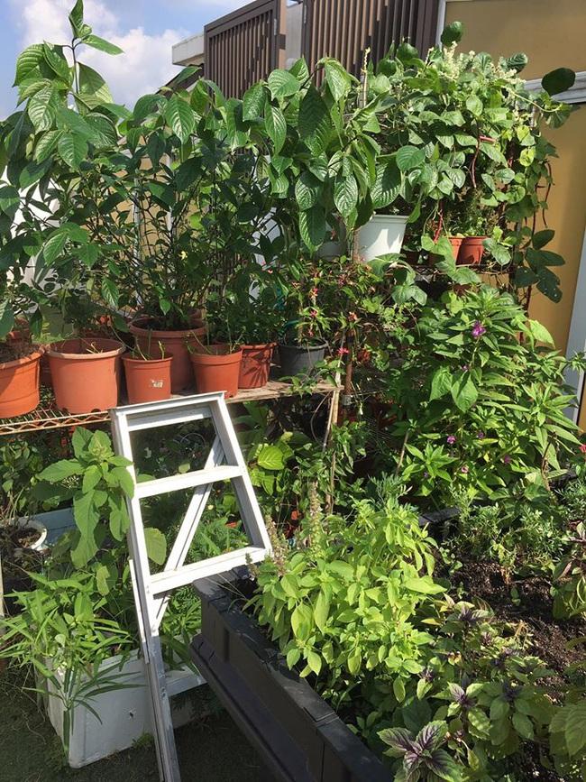 Cô gái trẻ quyết tâm biến sân thượng 20m2 thành khu vườn hữu cơ trồng không thiếu thứ gì khiến ai ngắm cũng ngỡ ngàng - Ảnh 3.