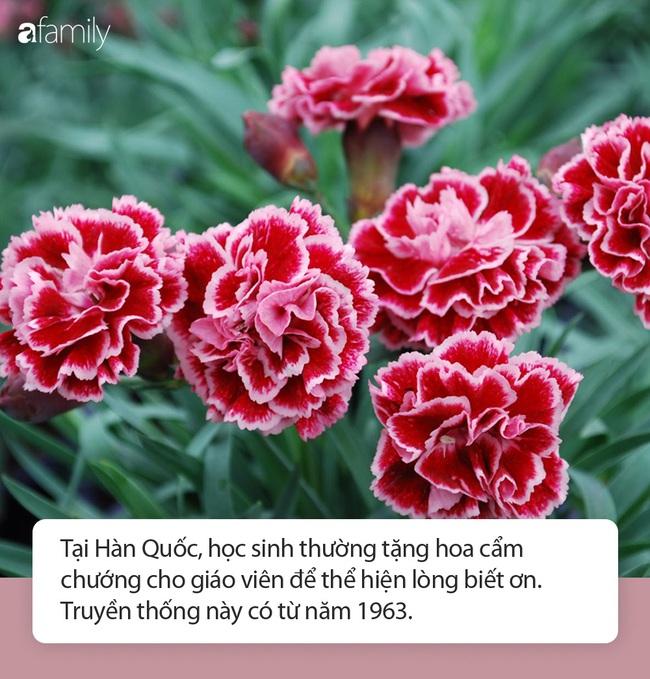 Ngó qua ngày Nhà giáo Hàn Quốc: Đủ hoạt động kỷ niệm thú vị, một loài hoa dành tặng thầy cô trong dịp này - Ảnh 4.