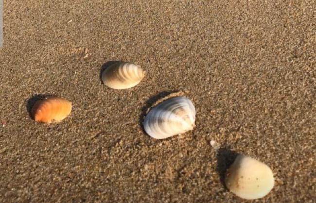 Song Joong Ki cùng gia đình đi nghỉ ở Hawaii, Song Hye Kyo lại đăng hình biển với vỏ sò, liệu có sự trùng hợp ở đây? - Ảnh 3.