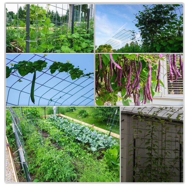 Khu vườn 185m2 phủ xanh rau ngon trái ngọt của người đàn ông yêu trồng trọt suốt 19 năm qua - Ảnh 18.