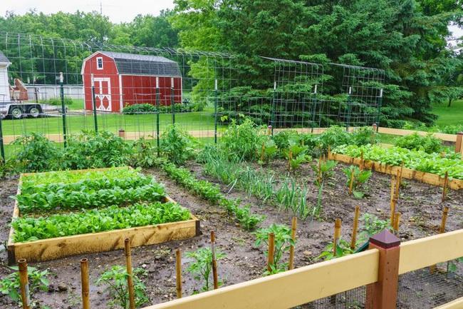 Khu vườn 185m2 phủ xanh rau ngon trái ngọt của người đàn ông yêu trồng trọt suốt 19 năm qua - Ảnh 17.
