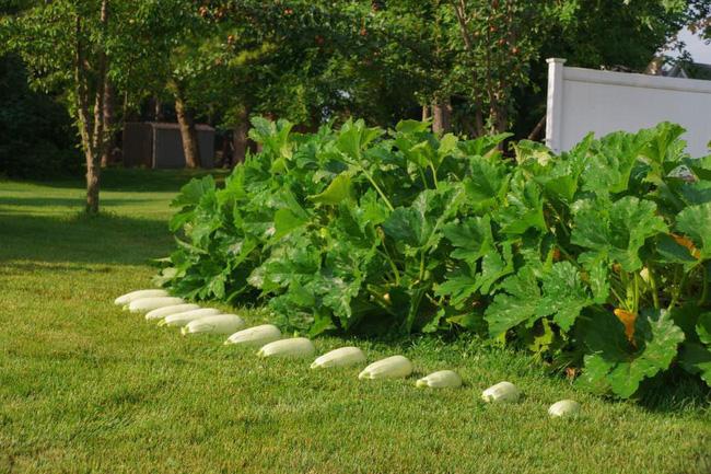 Khu vườn 185m2 phủ xanh rau ngon trái ngọt của người đàn ông yêu trồng trọt suốt 19 năm qua - Ảnh 14.