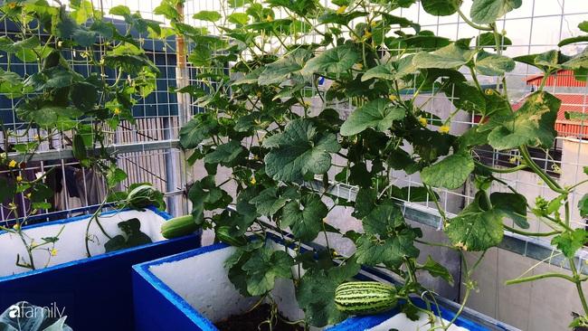 Sân thượng xanh mát đa dạng rau quả sạch cho bữa ăn thêm an tâm của mẹ hai con Hà Nội - Ảnh 10.