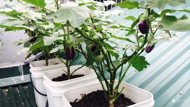 Sân thượng xanh mát đa dạng rau quả sạch cho bữa ăn thêm an tâm của mẹ hai con Hà Nội - Ảnh 5.