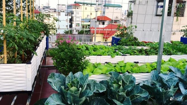 Sân thượng xanh mát đa dạng rau quả sạch cho bữa ăn thêm an tâm của mẹ hai con Hà Nội - Ảnh 2.