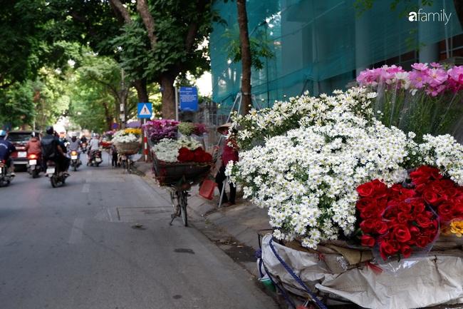 Vào mùa cúc họa mi đón đông khắp phố phường Hà Nội, giá rẻ nhiều chị em nô nức ghé vào mua - Ảnh 2.