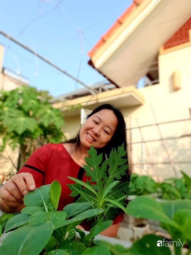 Vườn rau mùa đông nhiều nắng xanh tươi đủ loại của mẹ đảm ở Ninh Hiệp, Hà Nội - Ảnh 3.