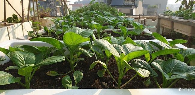 Vườn rau mùa đông nhiều nắng xanh tươi đủ loại của mẹ đảm ở Ninh Hiệp, Hà Nội - Ảnh 15.