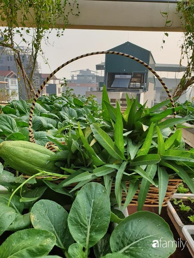 Vườn rau mùa đông nhiều nắng xanh tươi đủ loại của mẹ đảm ở Ninh Hiệp, Hà Nội - Ảnh 20.