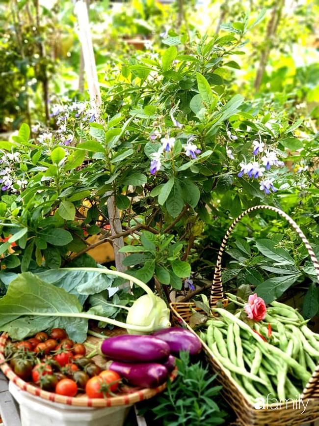 Vườn rau mùa đông nhiều nắng xanh tươi đủ loại của mẹ đảm ở Ninh Hiệp, Hà Nội - Ảnh 13.