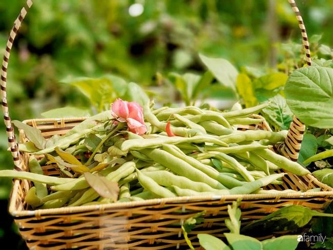 Vườn rau mùa đông nhiều nắng xanh tươi đủ loại của mẹ đảm ở Ninh Hiệp, Hà Nội - Ảnh 10.