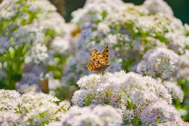 Cặp vợ chồng trẻ dành 5 năm để biến khu đất hoang rộng 6000m2 thành thiên đường của cỏ cây, hoa lá - Ảnh 10.