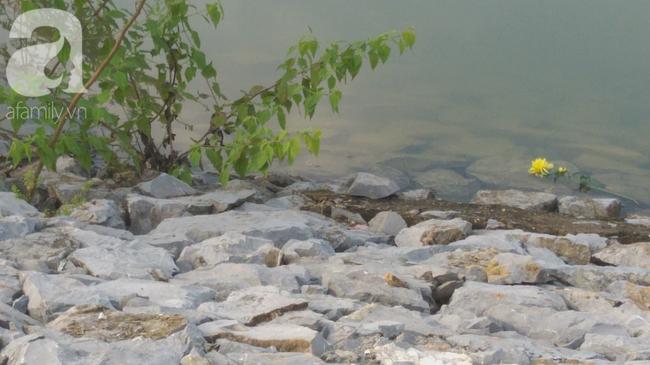 Bông hoa cúc nổi trên mép nước cạnh hồ