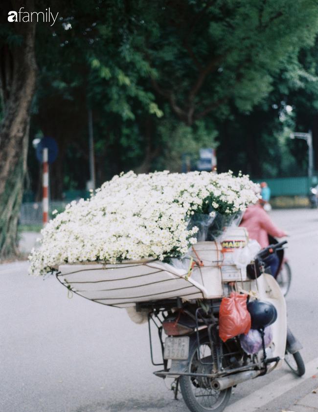 Mùa hè lưu luyến mãi chưa đi, nhưng cúc họa mi vẫn giữ đúng hẹn, chúm chím trên phố Hà Nội khi tháng Mười Một về - Ảnh 4.