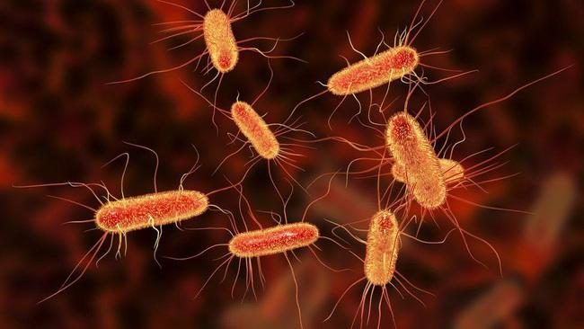 Ăn rau sống, hơn 100 người bị nhiễm vi khuẩn kháng kháng sinh – Lối thoát nào cho món ăn khoái khẩu? - Ảnh 5.