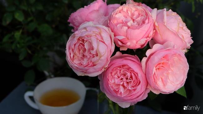 Sân thượng hoa hồng đua nhau khoe sắc ngọt ngào của nữ kế toán ở TP HCM - Ảnh 9.