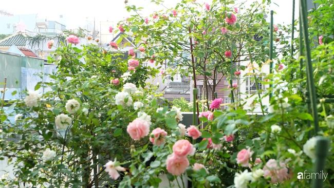 Sân thượng hoa hồng đua nhau khoe sắc ngọt ngào của nữ kế toán ở TP HCM - Ảnh 1.