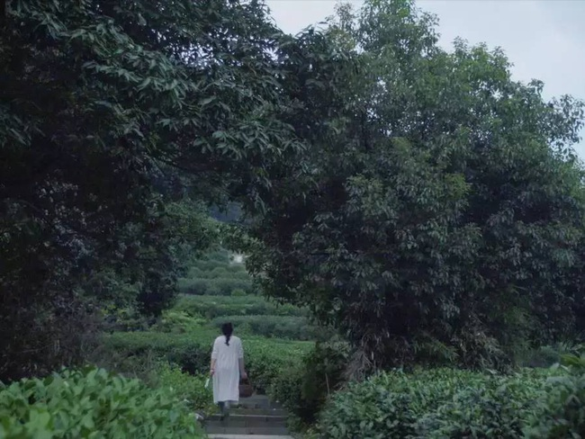 Yêu thích cuộc sống lãng mạn, cặp vợ chồng trẻ tạo không gian xanh mát giữa đồi núi mênh mông - Ảnh 5.